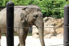 上野動物園: 象: EOS Kiss X3: プログラムAE 1/200sec F6.3 中央部重点平均測光 ISO100 55mm EF-S55-250mm