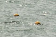 城崎海水浴場: 浮標ブイ: 拡大