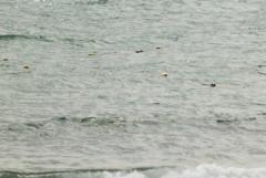 城崎海水浴場: 浮標ブイ