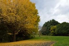 昭和記念公園: 紅葉のじゅうたん