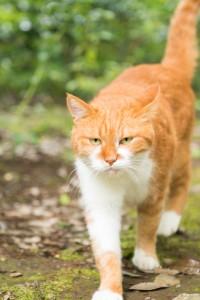 昭和記念公園: 歩いてくる猫