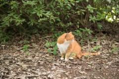 昭和記念公園: 座っている猫