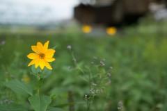 yellow-flower-under-bridge