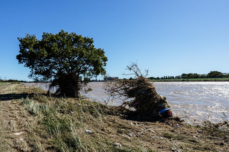 台風19号: 多摩川: 監視カメラに写っていた樹木